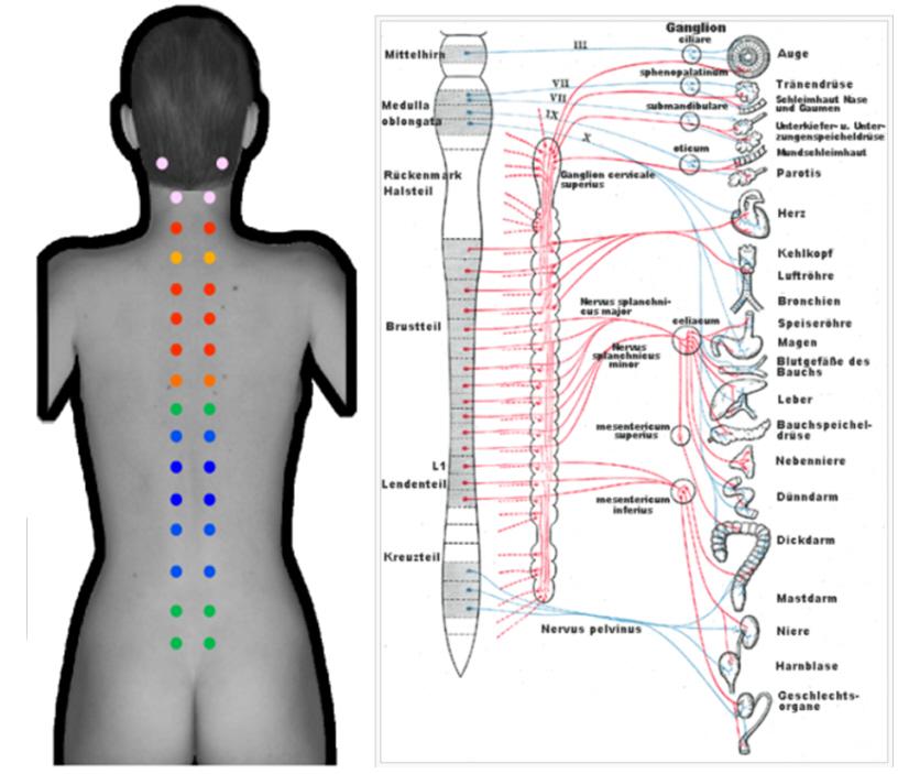 Rückenmessung paravertebral